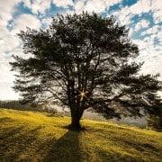 Kinder-Wunschbaum